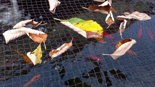 Pondh2o Pond Netting 20 X 16