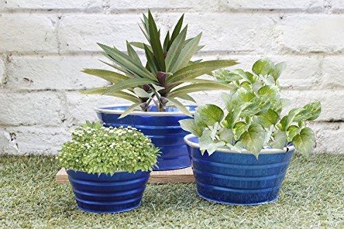 Diwali Gifts Blue Indoor Garden Planters Set Of 3 - Flower Bud Plant Potsndash Window Planter - Home Gardening Set