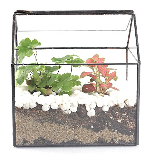 House Shape Close Glass Geometric Terrariumn Tabletop Succulent Plant Box Planter Moss Fern With Swing Lid Reptile