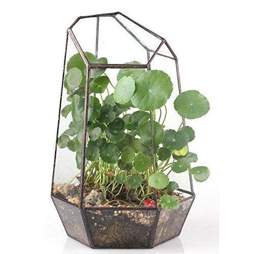 98 inches Height Irregular Glass Geometric Terrarium Box Tabletop Succulent Plant Planter Flower Pot Fern Moss