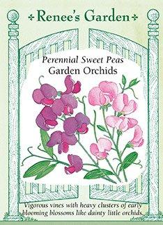 Sweet Peas - Perennial Garden Orchids Seeds