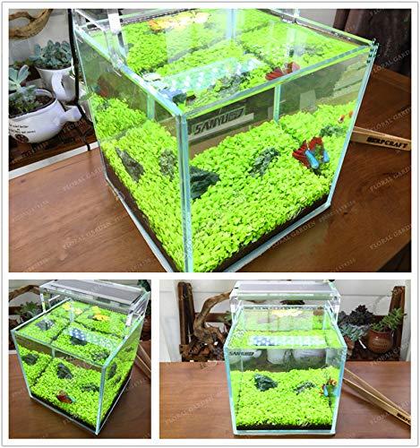 AGROBITS 500 pcsBag Aquarium Plants Bonsai Grass Water Aquatic Plant Bonsai Indoor Ornamental Plant Grass Bonsai for Home Garden Mix
