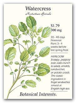 Watercress Seeds - 250 mg - Perennial Herb