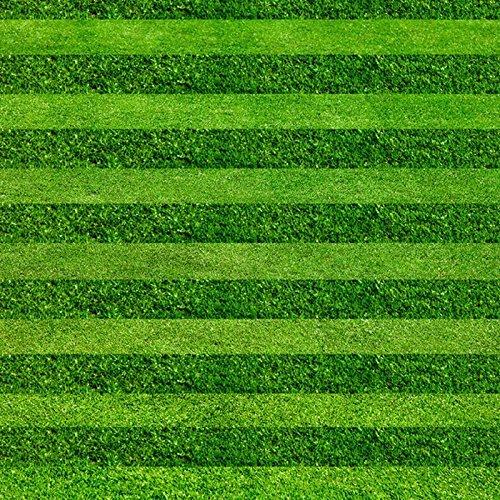 Turf Grass Seeds Golf Soccer Fields Villa Special grade Evergreen Lawn seeds 200pcs high-grade Flowers and seeds