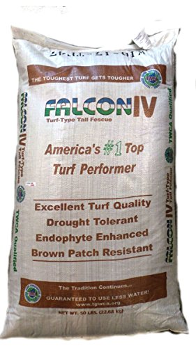 SeedRanch Falcon IV Turf Type Tall Fescue Grass Seeds - 10 lbs