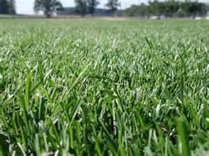 Cache Valley Premium Grass Seed Blend - 1 Pound - Wizard Seed LLC