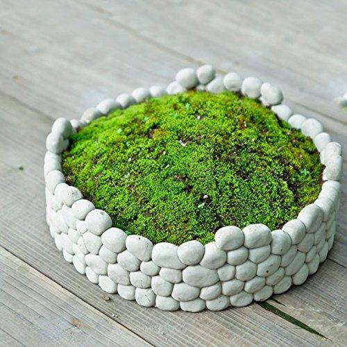 Sun-e Succulent Decorative Cement Grey Rock Wall Design Plant Holder  Garden Stone Flower Planter
