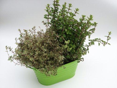3 Pretty Ribbed Metal Plant Pot Holders Green 23cm