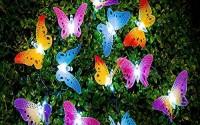 Image-reg-Butterfly-Solar-String-Lights-Decorative-Multi-color-Beautiful-Animal-Design-Light-20-Led-For-Garden-Lawn4.jpg