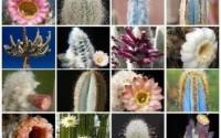 MIX-Columnar-cacti-outdoor-rare-cactus-garden-tall-cereus-flower-seed-100-SEEDS-17.jpg