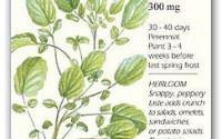 Watercress-Seeds-250-mg-Perennial-Herb-9.jpg