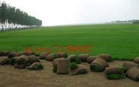 AGROBITS-200-Grass-Seeds-Special-Grass-Seeds-Lawn-Grass-Seeds-Evergreen-Perennial-61.jpg